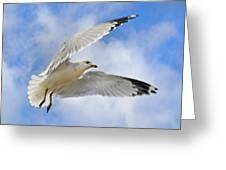 Jekyll Island Seagull Greeting Card