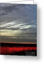 Kansas Prairie Grass Sunrise Greeting Card