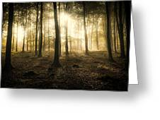 Kings Wood In Autumn Greeting Card