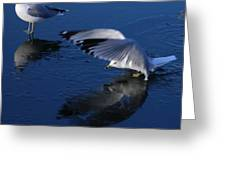 Landing On Icy Water Greeting Card