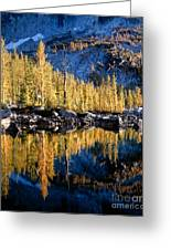 Larch Tree Reflection  Greeting Card