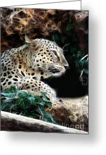 Leopard Watching It's Prey Greeting Card