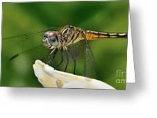 Austrogomphus Dragonfly Greeting Card