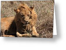 Lions Of The Ngorongoro Crater - Tanzania Greeting Card
