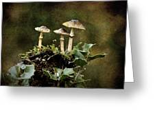Little Mushrooms Greeting Card