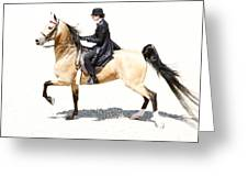 Lovely Gaited Buckskin  Greeting Card