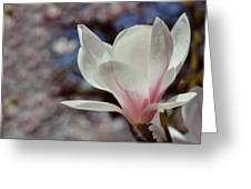 Magnolia Flowers In Spring Time Greeting Card