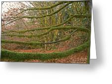 Moss-covered Big Leaf Maple Branches Greeting Card