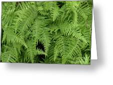 Mountain Ferns Of North Carolina Greeting Card