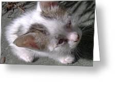 New Kitten's Debut Greeting Card
