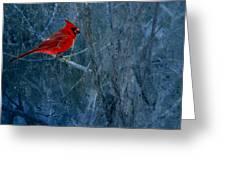 Northern Cardinal Greeting Card by Thomas Young