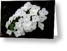 Oak Leaf Hydrangea Greeting Card