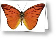 Orange Butterfly Species Appias Nero Neronis  Greeting Card
