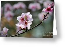 Peach Blossoms I Greeting Card