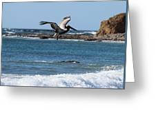 Pelican With Wet Feet Greeting Card