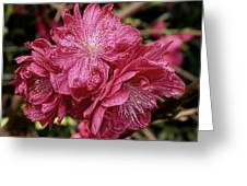 Pink Cluster Rhodie Img_2879 Greeting Card