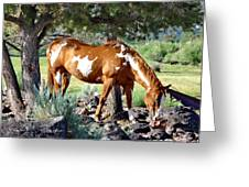 Pinto In The Pines Greeting Card
