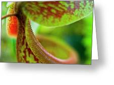 Pitcher Plants 2 Greeting Card