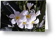 Plumeria  Greeting Card by Gornganogphatchara Kalapun