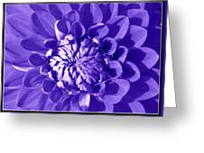 Pretty In Magenta Greeting Card