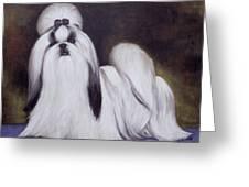 Pretty Showdog Shih Tzu Greeting Card