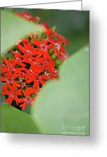 Red Butterfly Buds By Jammer Greeting Card