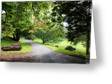 Road To The Forest Greeting Card