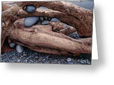 Rocks  In Driftwood Greeting Card