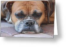 Sad Boxer Greeting Card