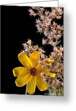 Shy Yellow Flower Greeting Card