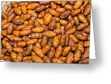 Silkworm Pupae  Greeting Card