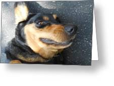 Silly Dawg Greeting Card