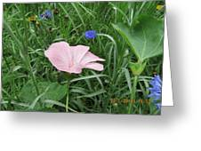 Softly Single New Pink Bloom Greeting Card