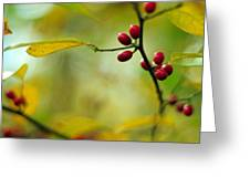 Spicebush With Red Berries Greeting Card