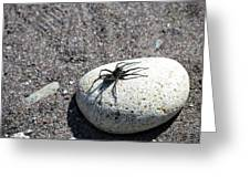 Spider In The Sun Greeting Card