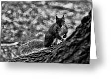 Squirrel In The Park V3 Greeting Card