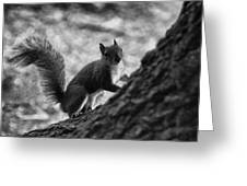 Squirrel In The Park V4 Greeting Card