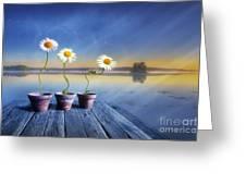 Summer Morning Magic Greeting Card