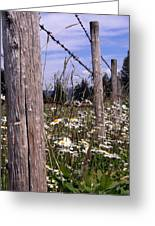 The Fenceline Greeting Card