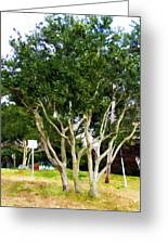 Trees In A Suburban Neighborhood In Summer Greeting Card