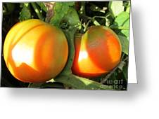 Vine Ripe Tomatoes Greeting Card