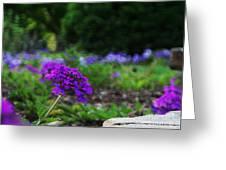 Violet Flower Greeting Card