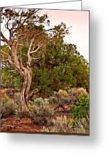 Weathered Tree Sunrise Canyon Dechelly Greeting Card