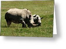 White Rhino Mother And Calf Greeting Card by Aidan Moran