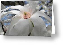 Willowy Magnolia Blossom Greeting Card