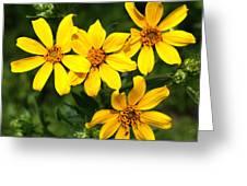 Yellow Texas Wildflowers Greeting Card