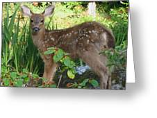 Young Fawn In The Grass Greeting Card