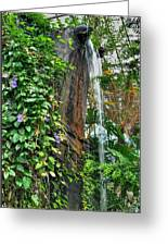 001 Falling Waters For The Cactus Lover In You Buffalo Botanical Gardens Series Greeting Card