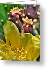 001 For The Cactus Lover In You Buffalo Botanical Gardens Series Greeting Card