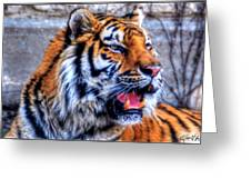001 Siberian Tiger  Greeting Card